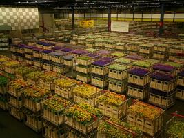 Склад аукциона по продаже цветов в Аалсмере (Нидерланды)