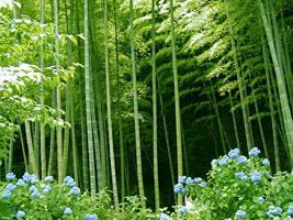 Бамбук - символ искренности