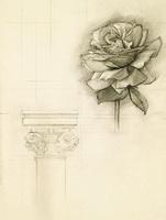Роза (рисунок графитом)